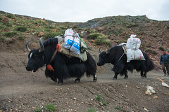 D4I_1544 (riccasergio) Tags: china cina tibet kailash xizangzizhiqu kora alidiqu cn