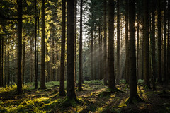forest series #117 (Stefan A. Schmidt) Tags: forest tree trees sunbeam sun light sunlight germany