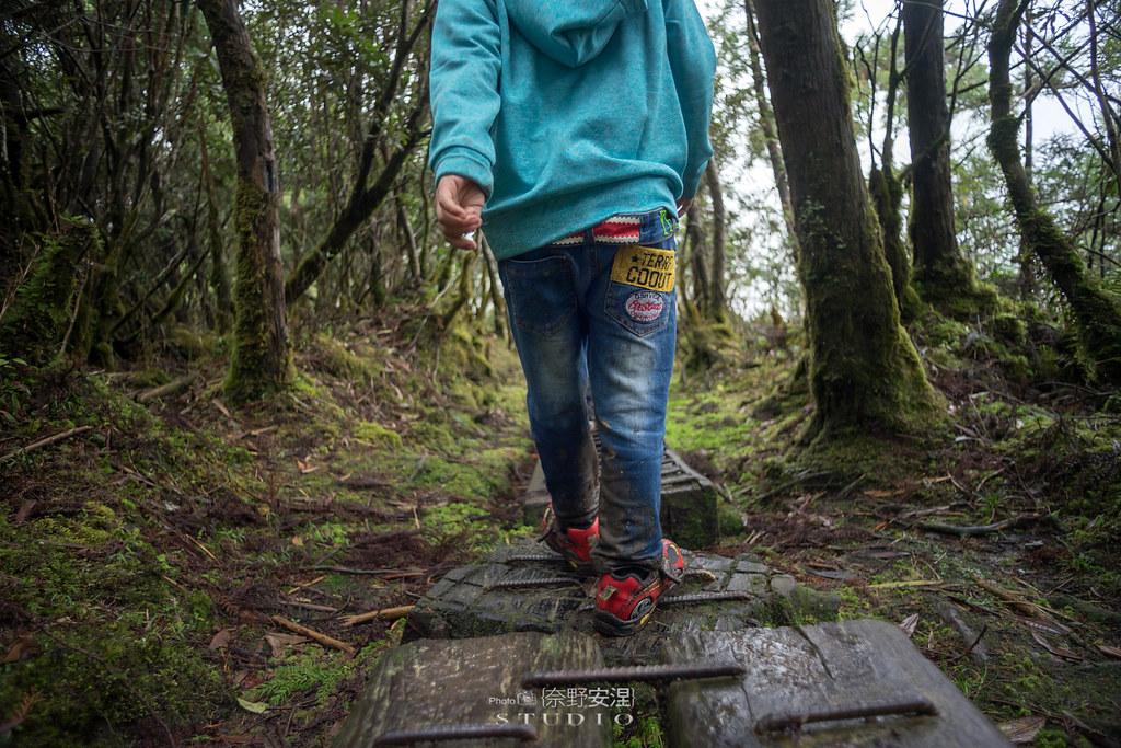太平山翠峰湖環山步道 |走在泥濘的道路上,只為途中美景 | 宜蘭大同鄉58