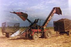 Sugar Cane (Andy961) Tags: australia queensland cairns babinda sugarcane farming machinery harvester