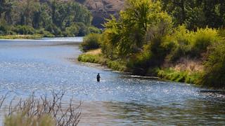 DSC_3472 Flyfishing cast in the Yakima River