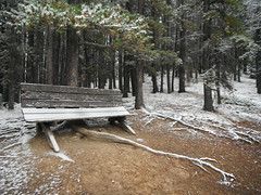 Freshly Fallen K Country (Mr. Happy Face - Peace :)) Tags: snow art2018 hiking alberta canada kcountry fall autumn weather scenery trails september naturelovers forest woodlands trees bearcountry hff benchmonday emptyseat lonelyseat