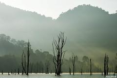 Death Trees Forest Sanctuary. Khao Sok National Park, Thailand. 2018/03. (joelgambrelle) Tags: sunrise nikond500 jungle deathtree khaosoknationalpark thailand thaïlande