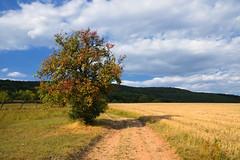 Prémices d'automne (Croc'odile67) Tags: nikon d3300 sigma contemporary 18200dcoshsmc paysage landscape ciel cloud sky nature nuage arbre tree campagne