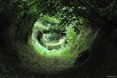 Chemin creux (philippeguillot21) Tags: chemin brainville manche cotentin normandie france europe verdure bocage pixelistes canon
