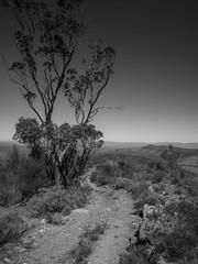the high road to mount helen (liam.jon_d) Tags: 4wd 4x4 mono adventure arty australia australian bw billdoyle blackandwhite blackandwhitelandscape centralflinders flinders flindersranges fourwheeldrive fourwheeldriving horseshoe horseshoerange horseshoerim horseshoerim4wdadventuretrack landscape monochrome moockra outdoor portraitformat portraitlandscape sa scenicrim southaustralia southaustralian theflinders thehorseshoe track trail uprightlandscape