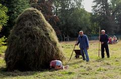 herinneringen (regionaal landschap Schelde-Durme) Tags: waasmunster kinderen pdpo lia natuurbeleving hooiland speelnatuur landschap landbouw biodiversiteit samenwerken