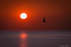 IMG_6526.jpg (markobablitz) Tags: sonne sonnenaufgang kiel schilksee kielerförde möwe himmel wasser orange vogel meer