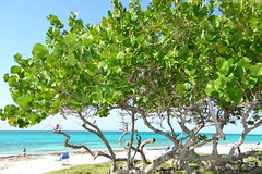 Composition 59 (antoaneta_vassileva) Tags: antoaneta vassileva nice summer day blue sea endless view green trees антоанета василева