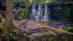Falls.... (Lee Harris Photography) Tags: waterfall waterfalls outdoor yorkshire uk contrast tree roots water light shade flowing rock forest