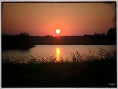 Golden Hour (Neoapril) Tags: landschaft holiday urlaub niederlande sonnenuntergang sonne water twilight golden dämmerung sun sunset landscape droompark hulckesteijn nijkerkernauw nijkerk gelderland netherlands