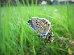 Butterfly 1725 (+1300000 views!) Tags: butterfly borboleta farfalla mariposa papillon schmetterling فراشة