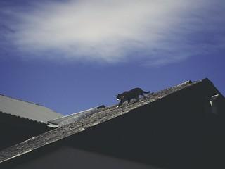 2018:09:09 14:15:34 - Katze auf dem Dach - Schmalensee - Schleswig-Holstein - Germany