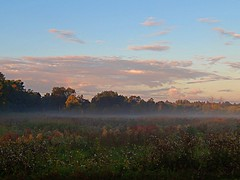 Slow (Pwern2) Tags: ottawa rockliffe birchdrive capital nationscapital urbanbeauty landscape mist morning goldenhour perspective greenery wildflowers ncc peace serenity tranquility quiet thickair freshair sunrise pink clouds