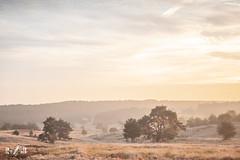 Sunrise at Veluwezoom (The Netherlands) (Renate van den Boom) Tags: 09september 2018 boom bos europa gelderland jaar landschap maand mist natuur nederland renatevandenboom veluwezoom weer zon zonsopkomst