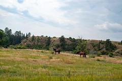 _DSC3011.jpg (kakemp) Tags: montana