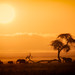 African Sunrise, Amboseli National Park