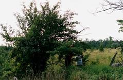 SF98 Tree (rumimume) Tags: potd rumimume 2017 niagara ontario canada photo canon 80d sigmarumimume owensound still summerfolk festival friends fun folk music kelso beach summer concert outdoor 1998