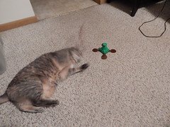 DSCN3210 (mestes76) Tags: 100617 duluth minnesota cats pets fetty fettucini cattoys butterflies playing