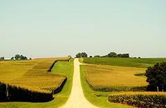 Over the hills and far away... (Cragin Spring) Tags: illinois il midwest unitedstates usa unitedstatesofamerica rural dirtroad corn cornfield sky trees shannon shannonil shannonillinois locustroad road ruralroad farm field