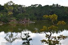 Morikami reflections, 3 (lauren3838 photography) Tags: laurensphotography lauren3838photography landscape morikami morikamimuseum gardens lake reflections trees florida nikon d750 nature ilovenature tourism