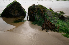 Rocks on the beach (DaveC...) Tags: lumixvario1260mm lumixdmcg80 beach sand rock seaweed seaside lowtide barnicles felpham westsussex uk reflections rockpool