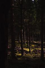 Loch Lomond 2017 (RichGWalker) Tags: scotland sunrise nature landscape loch lomond conic hill wide angle canon 500d sun forest wood tree light contrast