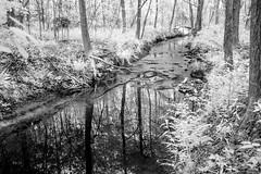 Creek Constrasts (Neal3K) Tags: ir infraredcamera kolarivisionmodifiedcamera henrycountyga georgia bw blackandwhite