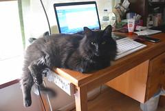 Vas'ka on my desk (Caulker) Tags: cat desk computer