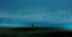 Birds the Fog (beachpeepsrus) Tags: rynchopsniger beach birds beachfront blackskimmers longbeachcalifornia longbeachgranprix light flower flight fog g