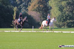 am_polo_cup18_0348 (bayernwelle) Tags: amateur polo cup gut ising september 2018 chiemgau bayern oberbayern pferd pferdesport reiter bayernwelle foto fotos oudoor game horse bavaria international reitsport event sommer herbst