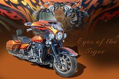 Eyes of the Tiger - Custom Painted Harley - (In Explore) (Brad Harding Photography) Tags: olemaraisriverruncarshow ottawa kansas harley harleydavidson hog motorcycle motorbike cycle bike customized custompaint tiger inexplore