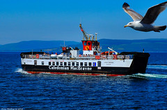 Scotland West Highlands Argyll at sea the car ferry Loch Riddon and Fred the seagull 1 July 2018 by Anne MacKay (Anne MacKay images of interest & wonder) Tags: scotland west highlands argyll sea caledonian macbrayne calmac car ferry loch riddon seagull seabird bird flying 1 july 2018 picture by anne mackay