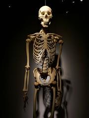 Real Bodies Exhibition (jacquemart) Tags: realbodiesexhibition realbodies exhibition nec birmingham plastination anatomy skeleton