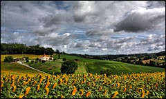 St Caprais in yellow (wiart.J) Tags: tournesols champ hdr jaune campagne