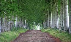 Promenade (Yvan LEMEUR) Tags: arbres allée alléedarbres promenade chemin balade extérieur landscape paysage