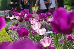 JLF14566 (jlfaurie) Tags: maintenon château castillo palace 22042018 jardin garden tulipes tulipanes tulips mechas gladys amigos friends michel magda sergio primavera printemps pentaxk5ii mpmdf jlfr jlfaurie spring flowers flores fleurs agua eau water canal intérieurs interiores inside