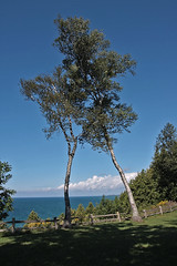 You're crowding me. (lada/photo) Tags: birch michigan usa lakesuperior trees ladaphoto nature