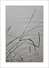 Reeds and Ripples (Mikec77) Tags: monochrome bw arty reeds