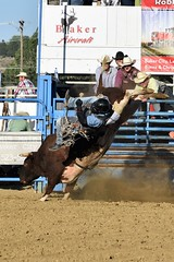 "Baker County Tourism – basecampbaker.com 47178 (Base Camp Baker) Tags: oregon ""easternoregon"" ""bakercountytourism"" basecampbaker ""basecampbaker"" ""bakercounty"" rodeo cowboys ""bakercitybroncandbullriding"" ""bakercity"" ""oregonrodeo"" ""minersjubilee"" oregonrodeo ramrodeo traveloregon travel tourism roughstock rodeolife bulls bullriding"