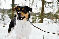 Mailo (K.easy) Tags: winter snowing christmas play photographer nature animals animal wildlife wild wildanimal portrait