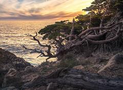 _DSC3644-Edit.jpg (sberkley123) Tags: california carmel nikon sunset cypresstrees trees d850 ocean pointlobos 1735mm pacific usa