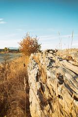 driftwwood (annapolis_rose) Tags: ionabeach driftwood beach richmond greatervancouver