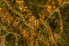 Fairy Tree Focus (stephenk1977) Tags: australia queensland qld brisbane nikon d3300 fairy light tree qut gardenspoint night illuminated handheld