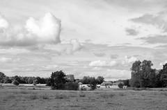 Dutch landscape-Drenthe (rwscholte) Tags: drenthe netherlands pentax rwscholte blackandwhite bw monochrome clouds landscape mensinge animal grass tree sky field forest nederland k5 1855mm