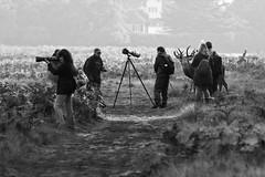Darwinism (abnormally average) Tags: bushypark photographer camera photo photog togger teddington surrey candid