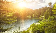 Sunburst (janos radler) Tags: alps summer switzerland engadin sunset forest lake wood nature