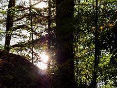 Лес на берегу Москвы-реки (Dmitry Kostin) Tags: inmosreg природа подмосковье лес nature forest light свет