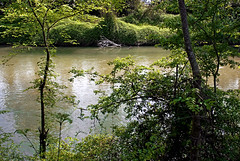 Savoie, 2008 (Joseff_K) Tags: vert verdure rivière river green greenery savoie savoy lawn tree arbre eau water france nikon nikond80 d80 nikkor28mmf28d nikonflickraward