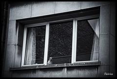 2018-07-05-Vennes(Liège)-42Pt (Pontalain) Tags: beobachtung blick liège vennes wallonie chien dog fenster fenêtre hund look mirada observación observation perro regard ventana window